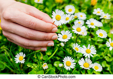 Macro close up of hand picking flowers.