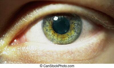 Macro Close up of human green eye