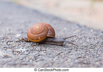 Macro close-up of snail on the road is moving slow. Select focus
