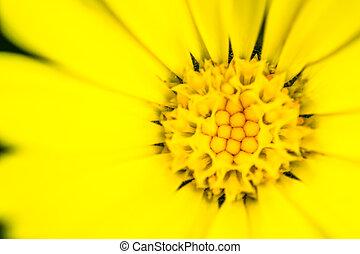 Macro closeup of a yellow flower Stamen