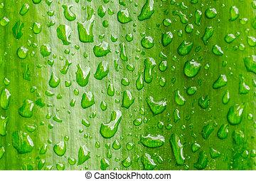 Macro closeup of Waterdrops on a Leaf