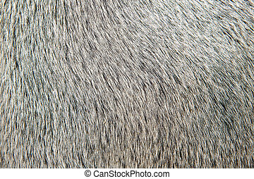 macro, détail, cheveux, closeup, taureau, blanc