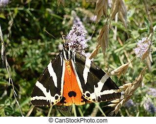 macro, de, a, borboleta, em, natureza