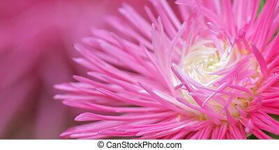 macro, de, flower.
