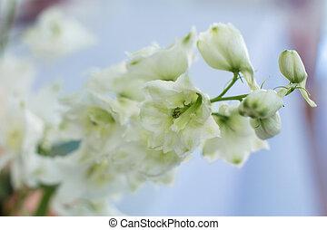 Macro delicate fresh wthite delphinum flower. Wedding fresh flowers decoration