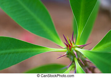 macro detail of a tropical plant