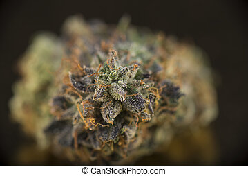 Macro detail of cannabis bud (death bubba marijuana strain)...