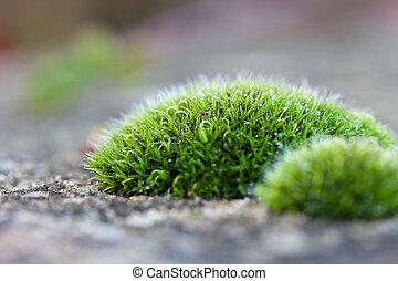 Macro detail of moss