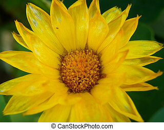 detail of yellow flower