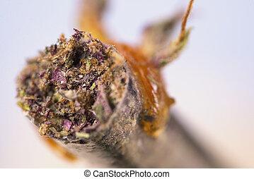 macro, detail, van, cannabis, joint, met, enig, olie, op,...