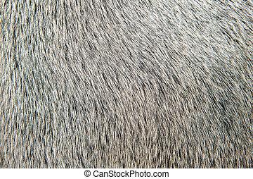 macro, detalhe, cabelo, closeup, touro, branca
