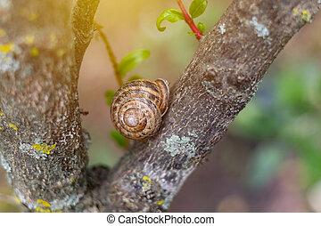 macro, enfoque., fondo., texture., deslizamiento, caracol, garden., cáscara, primer plano, confuso, verde, de madera, profundidad, cortocircuito, árbol