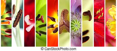 macro, fleurs, ensemble, étamines, fleurir