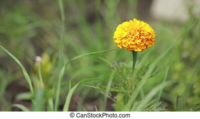 macro, flower.