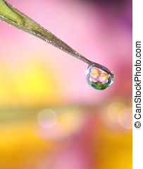 Macro Flower Water Drop Reflection