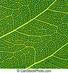macro, foglie, vettore, struttura