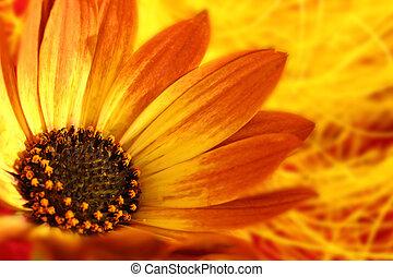 macro, grit, van, oranje bloem, met, kroonbladen, en, stuifmeel