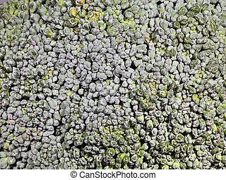 macro head of broccoli