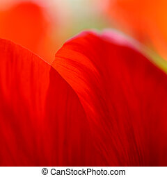 Macro Image of Bright Red Tulip Petals in Soft Style