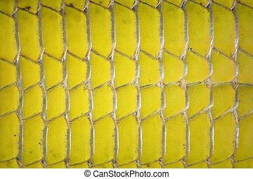 macro image of green lizard abdomen scales ( Lacerta...