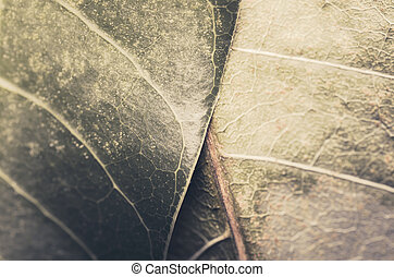 Macro leaf of mango in the nature concept