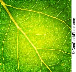 macro, leaf., vector