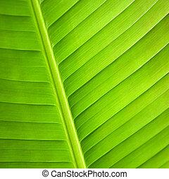 macro, leaf., verde, fine