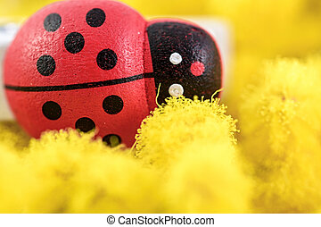 macro mimosa and toy ladybug for womens day