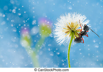 mini dandelion with ant