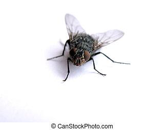 macro, mosca
