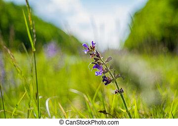 macro of a beautiful purple plant
