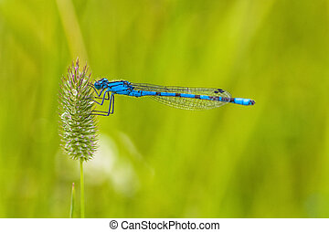 Macro of a Blue Damselfly - Close-up of a blue damselfly...