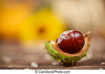 Macro of a chestnut on a wooden table