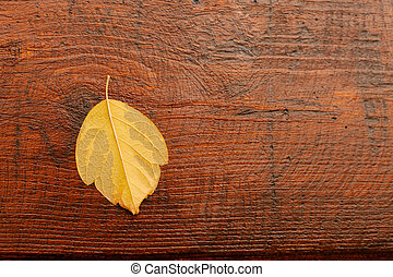Macro of a dry yellow leaf in the fall