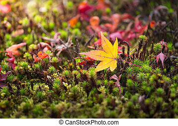 macro of a fallen leaves in autumn forest