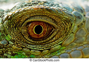 green iguana eye - macro of a fantastic green iguana eye
