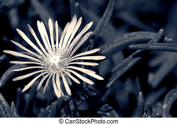 Macro of a small flower in artistic conversion