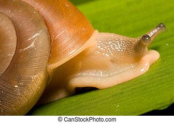 Snail - Macro of a Snail