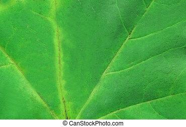 Macro of autumn green tree leaf