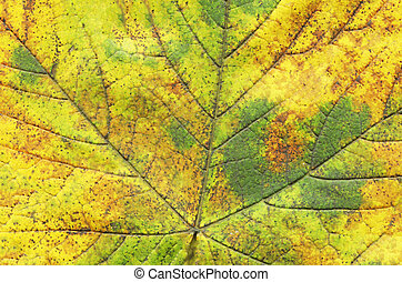 Macro of autumn green tree leaf
