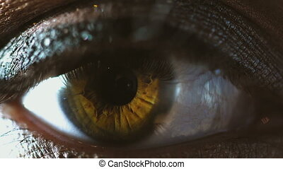 beautiful Brown eyes of young woman - macro of beautiful...