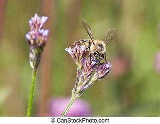 Macro of bee on small purple flower detail