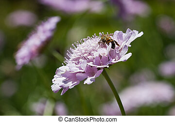 Macro of bee sitting on lilac flower
