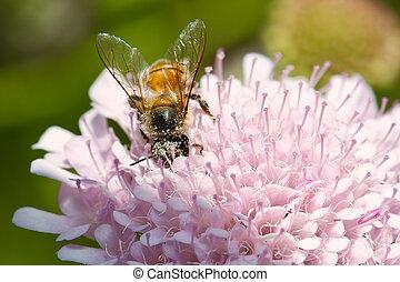 Macro of bee sitting on purple flower