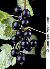 Macro of black currant on black reflective background