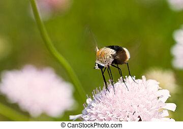 Macro of brown bug sitting on purple flower