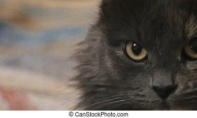 Macro of cats face grainy shot - Macro of cats face grainy...