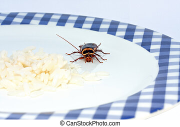 macro of cockroach approaching rice on a plate