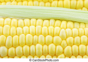 Macro of Corn on the Cob