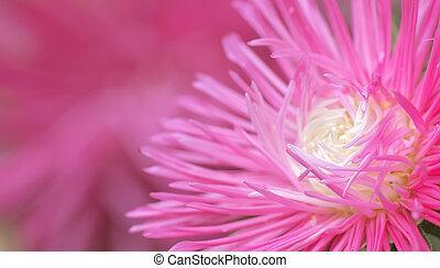 Macro of flower.